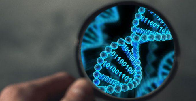 DNA paternity profiling